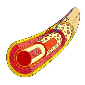 Blutgefäß