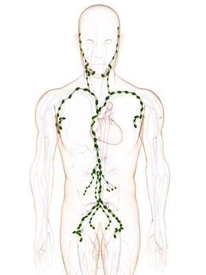Das menschliche Lymphsystem – Organe.de